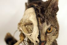 Curiosities: Animal Bone Art, Skull Collections and Vulture Culture / by Mishele DuPree Winter