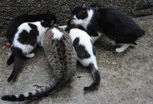 Gatti / Foto e immagini di gatti e gattini e tutto ciò che appartiene al loro mondo.