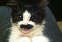 Cute Fuzzy Animals