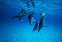 Marine Life / o fundo mar é uma viagem!