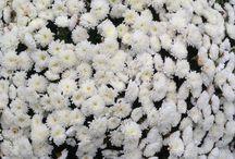 Wit / Wit ...  gevoel van rust, reinheid, schoonheid.