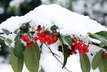Winter Crafts / Best craft ideas to make this winter!