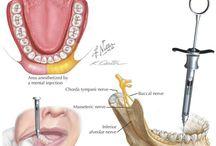 • dentistry •