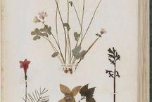 botanical inspirations