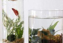 jardin acuatico