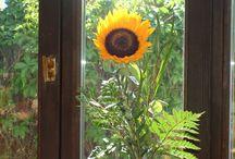 Növények, virágok a házban