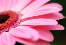 I love Pink!!!!!  / by Joleen Springer
