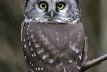 Owly World / All about owls!