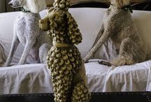 in Poodle world  / by Roxio Milagros