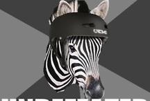 Derby jokes / Zebra and skating hilarity
