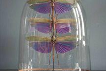 Collezioni di Insetti e artropodi / Farfalle ma anche di ragni e altri antropodi.