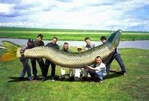 Fishy photoshop pictures - real or fake?