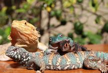 Animals / Animal ambassadors of VTNC
