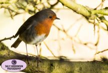 Wildlife Photography - taken by me / Some of my best wildlife pictures taken on my Canon 70d