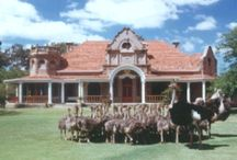 History @ Safari Ostrich Farm / History of ostrich farming in Oudtshoorn, Klein Karoo in South Africa
