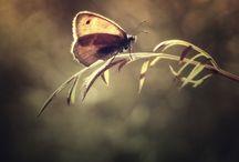 Ella El / nature, wildlife, animals, flowers, insect,
