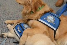 LCC Comfort Dog Ministry