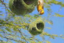ptasie gniazda