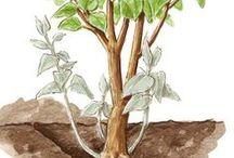 Bäume u. Pflanzen schneiden