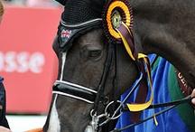 Valegro ❤️ / Le champion olympique . ❤️