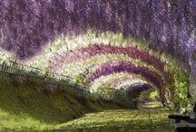 Favorite Places & Spaces / by Julie Nellon