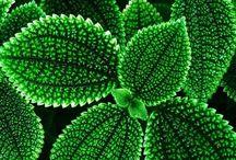 Verde que te quiero verde / La vida en verde