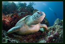 Sea Turtles / by An'gel Ducote