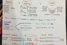 Fisiologia geral e humana