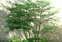 beautiful small trees / every garden needs a tree