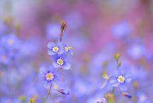 Virágok és madarak