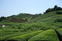 Tea Travels - Japan / Pictures from our trips around the world to search the best teas out there!