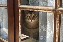 Kedi alfabesi (: