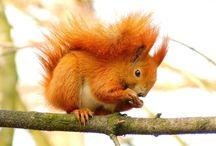 Tapety - zwierzęta - wiewiórki