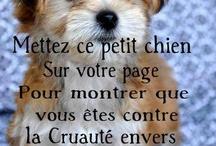 Tender Pets | Animaux attendrissants! / If pets could talk... maybe we could cry sometimes! Si votre animal pouvait parler, nous serions très touchés parfois!