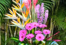Blooming / by Four Seasons Resort Punta Mita, Mexico