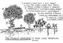 Garden- Permaculture