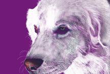 Pet portraits / Drawings of pets and animals using iPad Mini Procreate App.