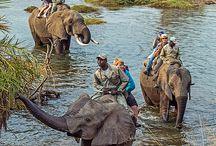 Wildlife - The Safari Page.