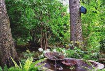 woda w cienistym ogrodzie