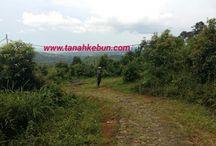 tanah kebun / Media fasilitas jual beli lahan/tanah area bogor, sukabumi dan cianjur