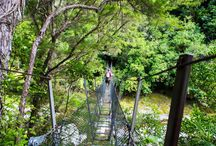The suspension collection / Swing Bridges around New Zealand