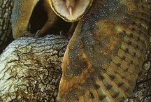 Owl!! <3