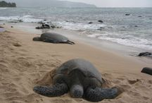 Hawaii trip 2015 / by m.g.h.