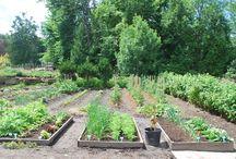 Jardin2m et les solutions potager! / Les potagers peuvent prendre différentes formes! En bacs, en pots, en paniers suspendus...ou de façon traditionnelle au jardin!