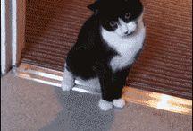 ❤❤❤❤❤ Cats ❤❤❤❤❤