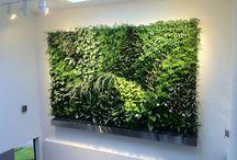 piante stabilizzate