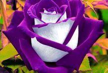 Flori si altele