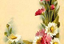 FLOWERS alfabet