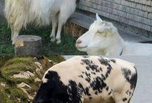 Animals 'n' veganism