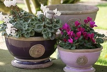 the ickle pot plant garden / by Harper